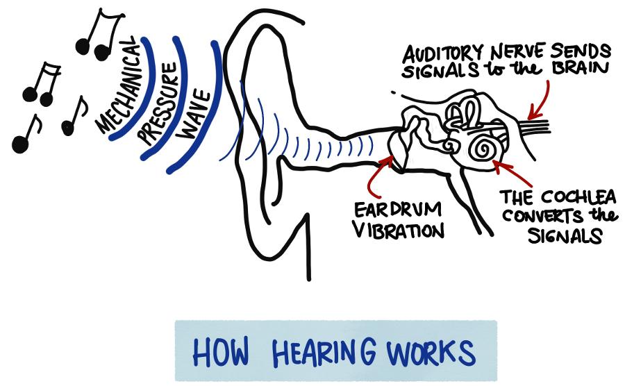 About Hearing Seear